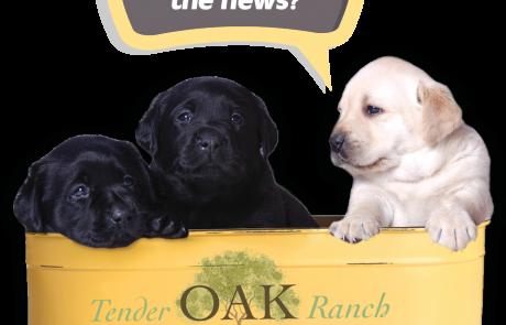 Tender Oak Ranch offering Black Labrador Puppies